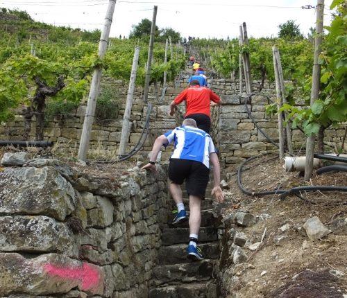 401 Weinbergstaffeln - so sieht sie aus, die Steillage in Rosswag. Dass hier auch die Läufer zu kämpfen haben, versteht sich von selbst.