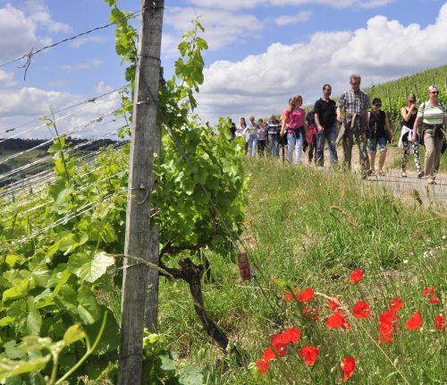 Man sieht zahlreiche Wanderer bei der Weinwanderung beim Markelsheimer weinfest