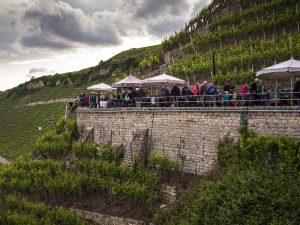 Wir sehen zahlreiche Menschen auf einem Weg quer durch die Steillage in Mundelsheim, sie feiern das Mundeslsheimer Käsbergfest.