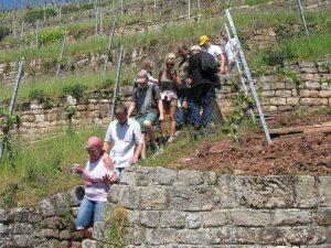 Mehrere Besucher und Besucherinnen des Esslinger Weinwandertages laufen die Esslinger Weinbergstaffeln hinunter