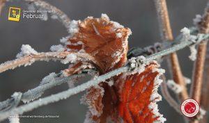 Man sieht gefrorene Überreste der vorherigen Jahrganges, eine Aufnahme von Heidi Brose-Schilling.