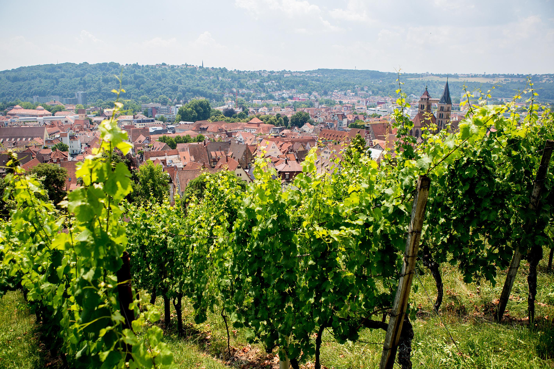 Die Trockenmauer Terrassen rahmen die Stadt Esslingen.