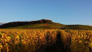 Blick auf die Fellbacher Weinberge