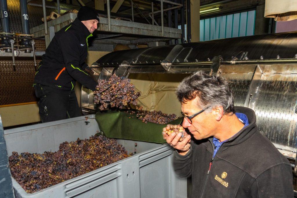 In der Kelter in Markelsheim werden die angelieferten Trauben verarbeitet, man sieht zwei Helfer bei der Arbeit