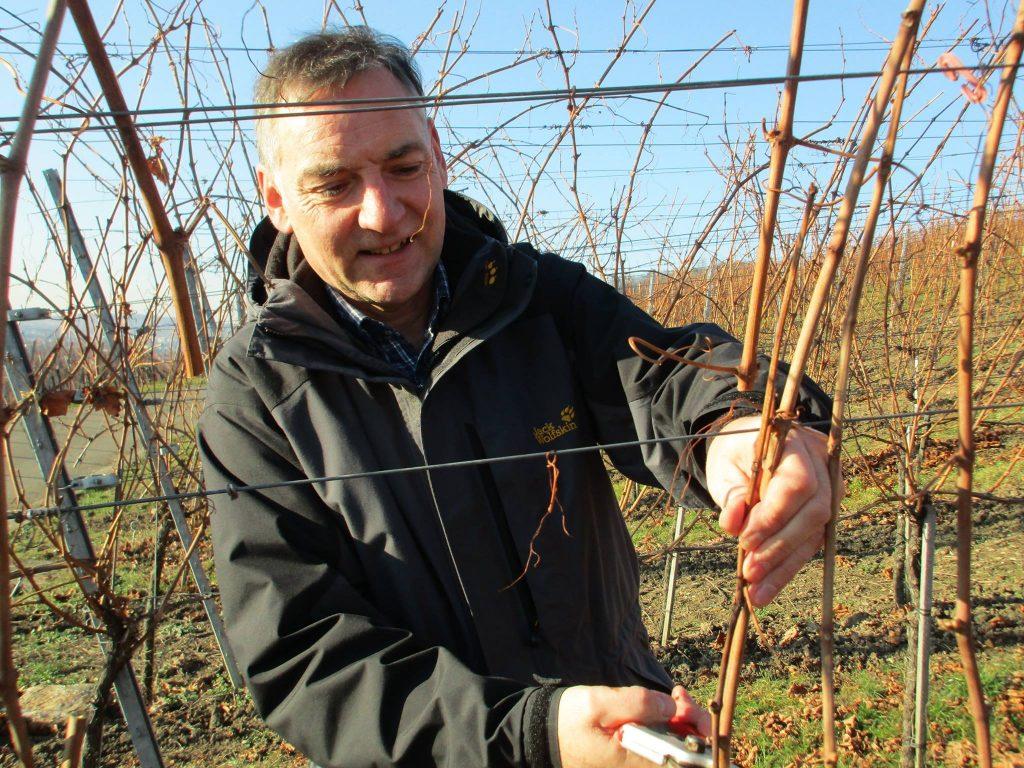 Man sieht einen Weingärtner beim schneiden seiner Reben