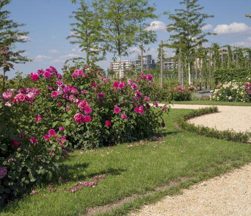Blumen auf der Bundesgartenschau