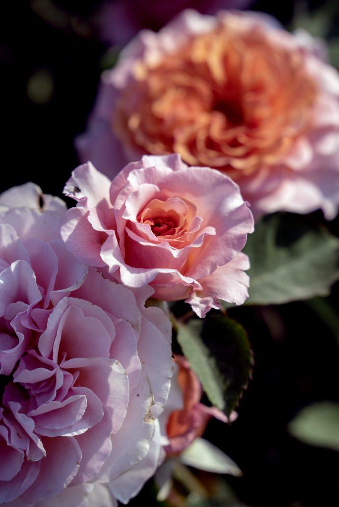 Blumen auf der Bundesgartenschau Heilbronn