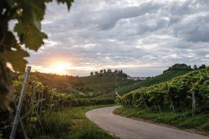 Der Stuttgarter Weinwanderweg mit Sicht auf die Rotenberger Kapelle