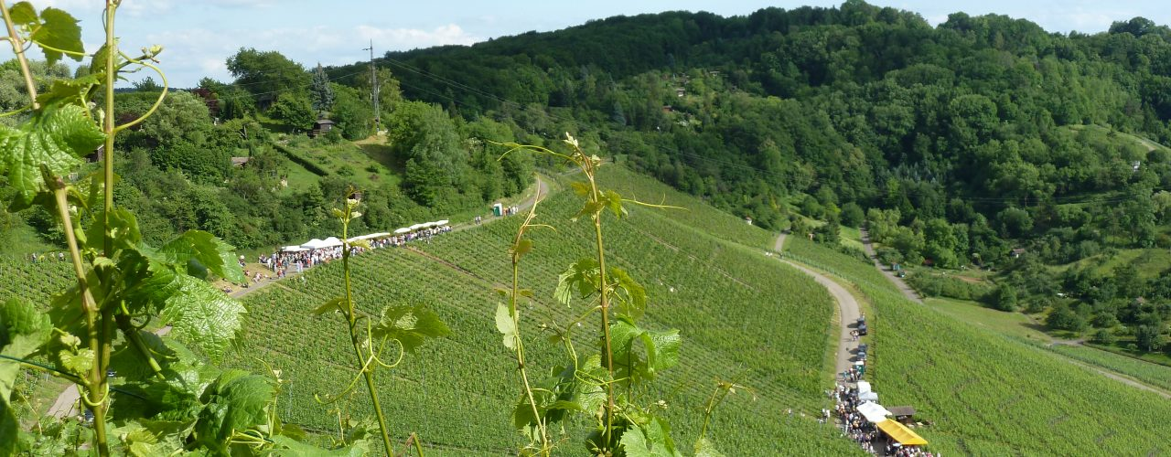 Weinwanderung am Götzberg