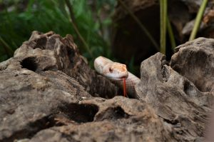 Schlangen im Tierpark Nymphaea