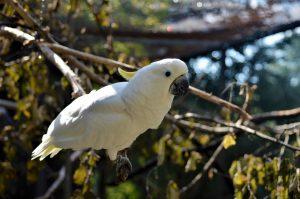 Vögel im Tierpark Nymphaea