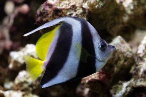 Fische im Tierpark Nymphaea