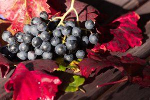 Trauben auf Herbstlichen Weinblättern