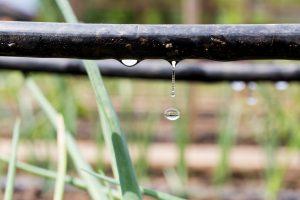 Tröpfchenbewässerungssystem