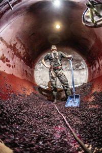 Lukas Ernst steht mit einer blauen Schaufel in Arbeitsklamotten zwischen Trauben