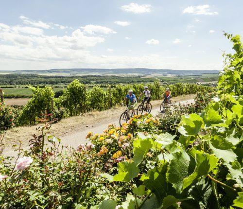 Radfahrer in den Weinbergen bei Neippberg auf einer Radtour