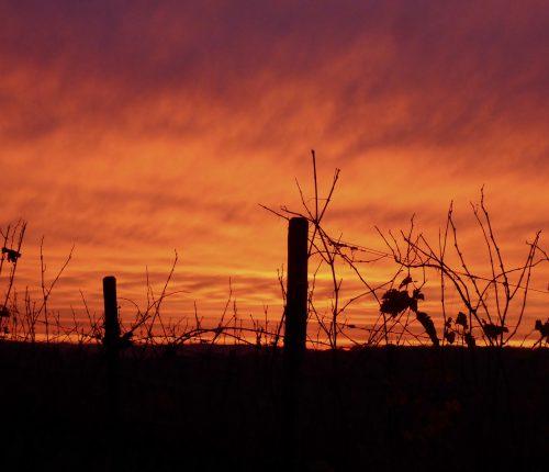 Foto des Monats November zeigt einen blutroten Himmel beim Sonnenuntergang, im Vordergrund erkennt man Reben