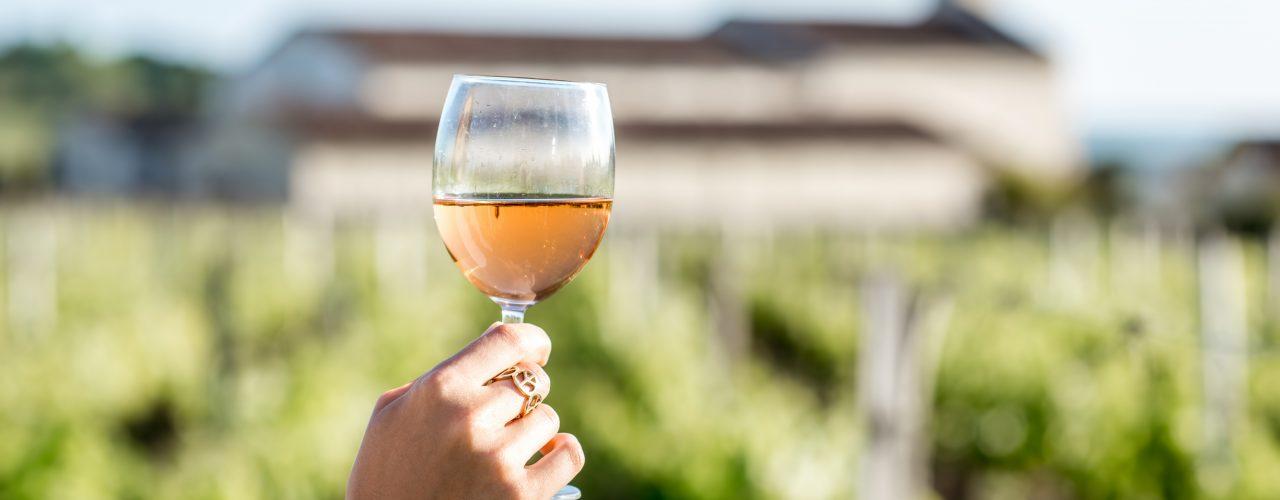 Live Online-Weinprobe der Lauffener Weingärtner   man sieht eine Hand die ein Weinglas vor den Weinreben erhebt