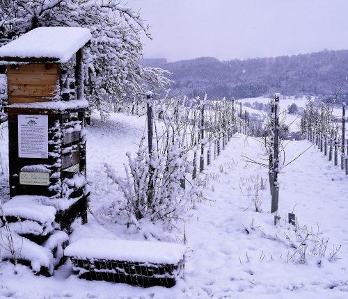 Foto des Monats Januar. Man sieht einen eingeschneiten Insektenturm und die kahlen Reben.