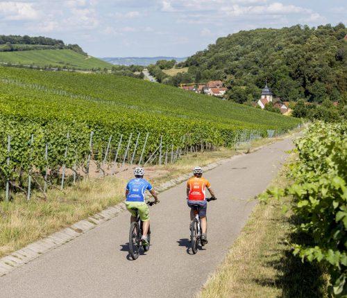 Radfahrer auf dem Württemberger Weinradweg
