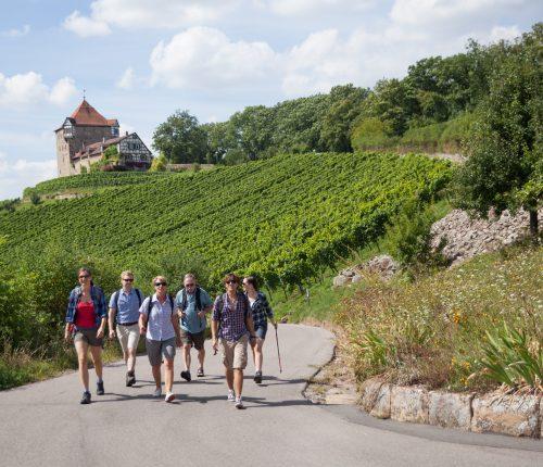Kleine Gruppe auf dem Württembergischen Weinwanderweg