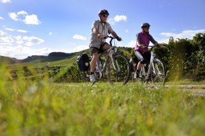 Ein Mann und eine Frau fahren auf dem Fahrrad den Württemberger Weinradweg an Reben entlang