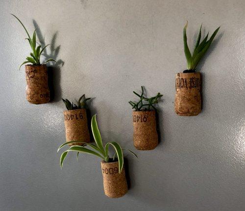 Mini-Pflanzen für den Kühlschrank DIY
