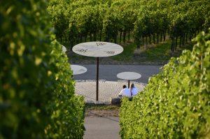 Auf Erkundungstour im Weinsüden