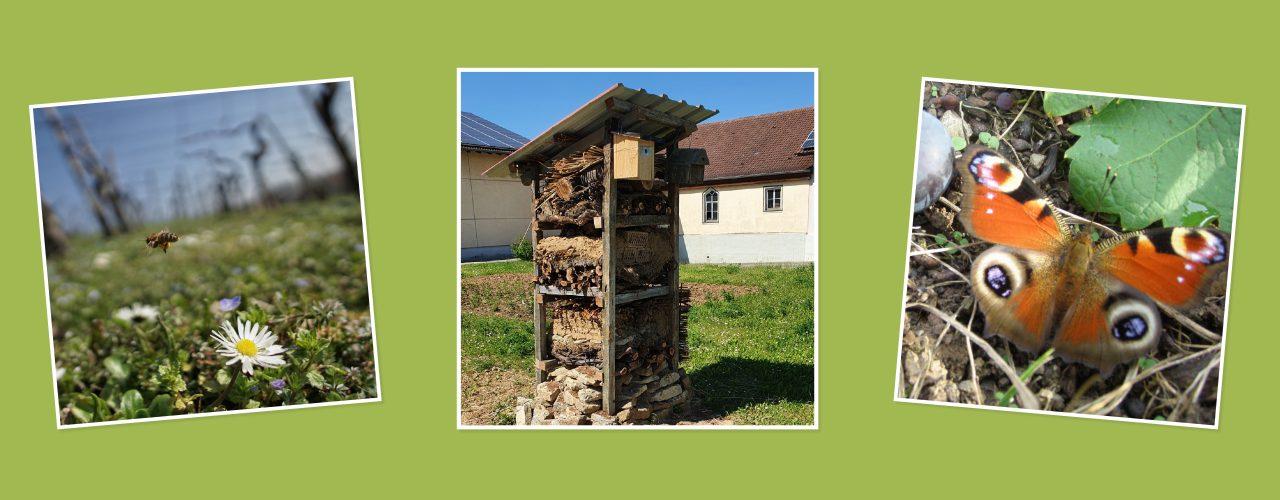 Man sieht den Lebensturm der Weingärtner Markelsheim, außerdem auf weiteren Fotos eine Wespe oder Biene und einen Schmetterling.