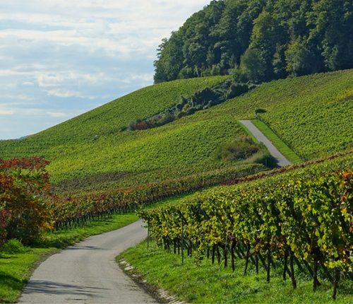 Weinheimat Landschaft Heilbronner Land