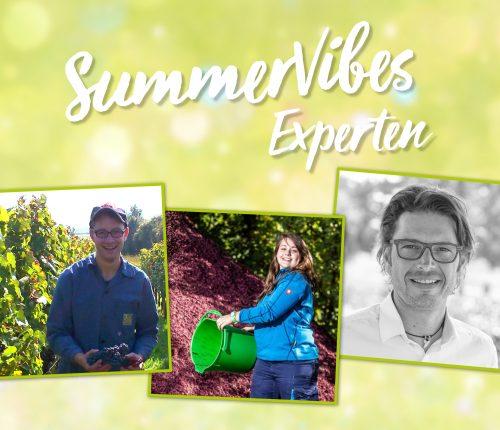 """Drei der Teilnehmer der Online-Verkostung """"SummerVibes aus der Weinheimat"""""""